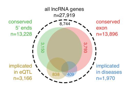 IncRNA.png